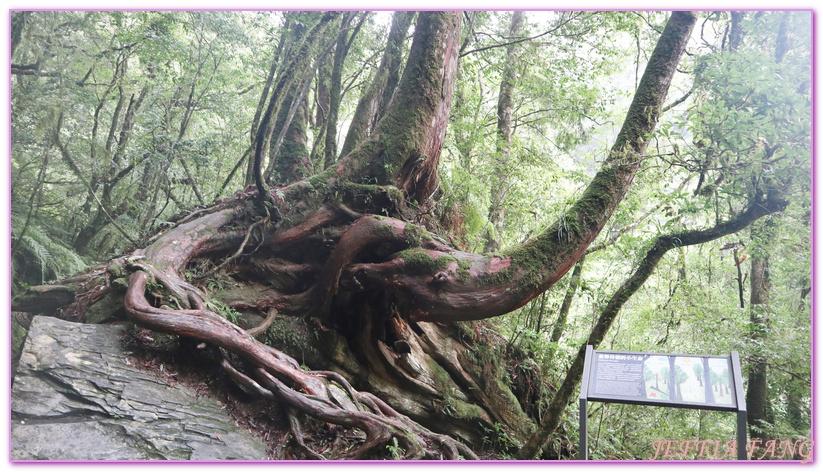 台灣旅遊,台灣最大面積紅檜森林,拉拉山巨木群,拉拉山自然保護區,桃園旅遊,桃園金牌好遊 @傑菲亞娃JEFFIA FANG