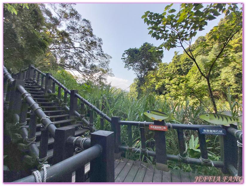 南庄生態旅遊,台灣旅遊,國際慢城南庄,苦花魚,蓬萊溪護魚步道 @傑菲亞娃JEFFIA FANG