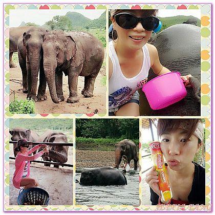 ELEPHANTS WORLD,北碧府,景點,泰國,泰國旅遊 @傑菲亞娃JEFFIA FANG