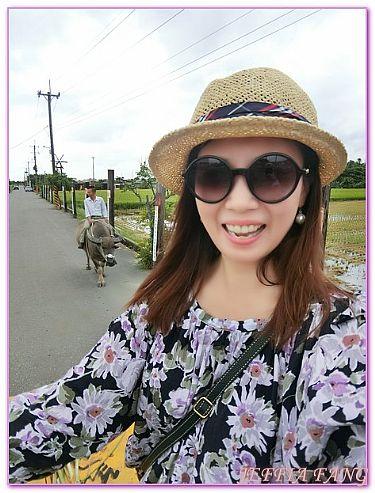 台灣,台灣Taiwan旅遊,嘉義Chia Yi,景點,頂菜園鄉土館 @傑菲亞娃JEFFIA FANG