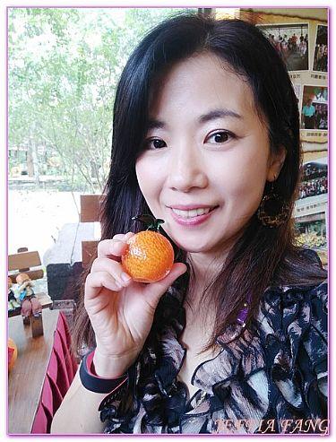台灣,台灣旅遊,嘉義Chia Yi,景點,民雄金桔觀光工廠 @傑菲亞娃JEFFIA FANG
