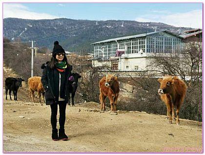 仁安大寶寺藏族人家,大陸,大陸旅遊,景點,香格里拉 @傑菲亞娃JEFFIA FANG
