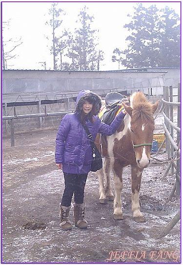景點,濟州OK騎馬場,韓國,韓國旅遊,韓國濟州景點 @傑菲亞娃JEFFIA FANG