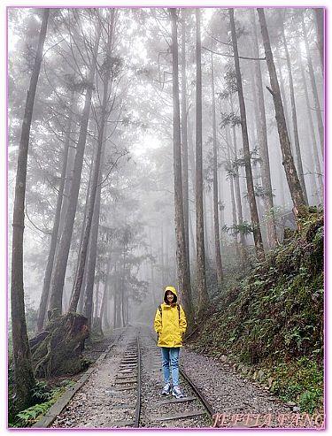 台灣,台灣旅遊,太平山國家森林遊樂區蹦蹦車茂興懷舊步道,宜蘭,景點 @傑菲亞娃JEFFIA FANG