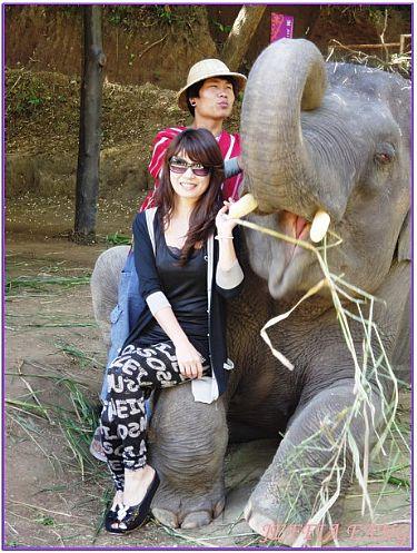 景點,泰國,泰國清邁旅遊,清邁大象學校,清邁自由行 @傑菲亞娃JEFFIA FANG